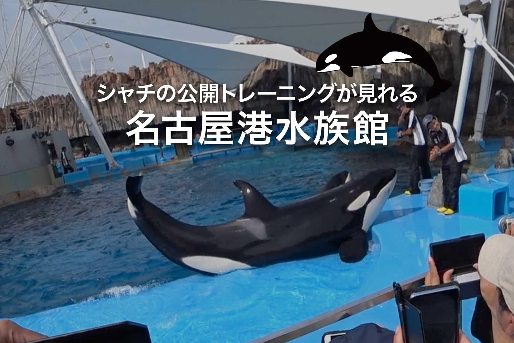 名古屋港水族館でシャチの公開トレーニングを見てきた